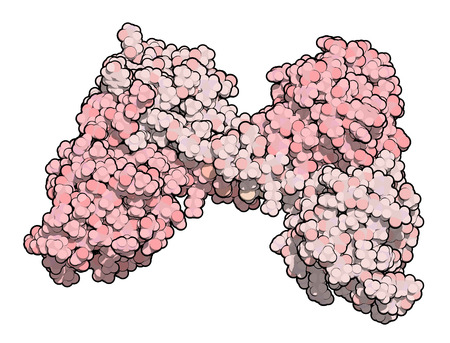 dystrophy: Dystrophin muscle protein domain (N-terminal actin binding domain). Defects cause Duchenne muscular dystrophy (DMD). Atoms are represented as color coded spheres. Per chain coloring. Stock Photo
