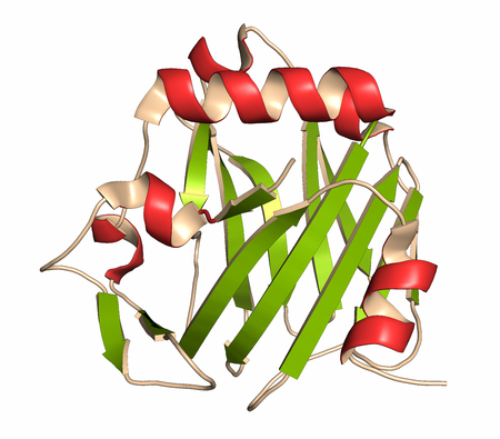 coloring sheets: Thrombospondin-1 protein (N-terminal domain). Cartoon representation with secondary structure coloring (green sheets, red helices).