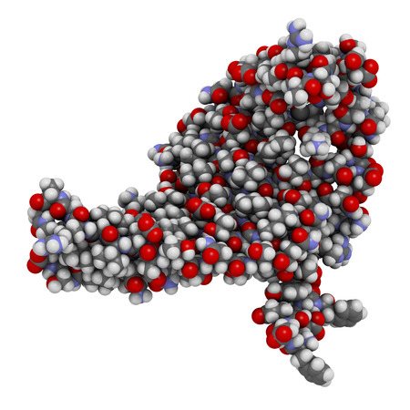 bombyx mori: Silk fibroin fragment (N-terminal domain). Fibroin is one of the two main components of silk, produced by the silkworm (Bombyx mori). Atoms are represented as spheres with conventional color coding.