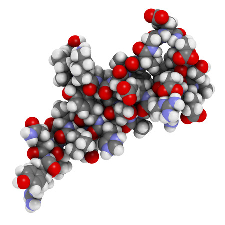 peptide: Peptide YY (PYY) appetite reducing polypeptide. Atoms are represented as spheres with conventional color coding.
