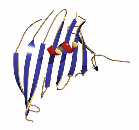 bombyx mori: Silk fibroin fragment (N-terminal domain). Fibroin is one of the two main components of silk, produced by the silkworm (Bombyx mori). Cartoon representation with secondary structure coloring (blue sheets, red helices). Stock Photo