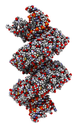 transcription: TAL (transcription activator like) effector protein or TALE. DNA binding protein. In TALEN technology, these are combined with nucleases to enable genome editing. Atoms are represented as spheres with conventional color coding. Stock Photo
