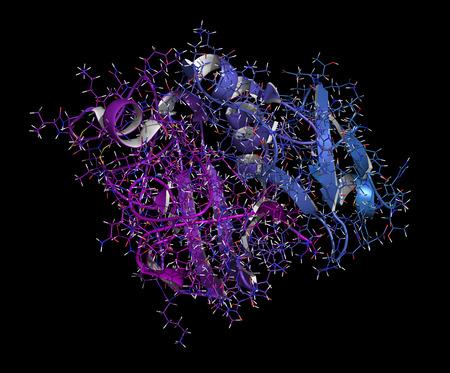cytokine: Angiopoietin 2 vascular growth factor protein (receptor binding domain). Cartoon & stick representation with backbone gradient coloring.