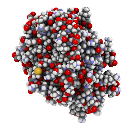 polypeptide: Plasma kallikrein enzyme molecule. Atoms are represented as spheres with conventional color coding. Stock Photo