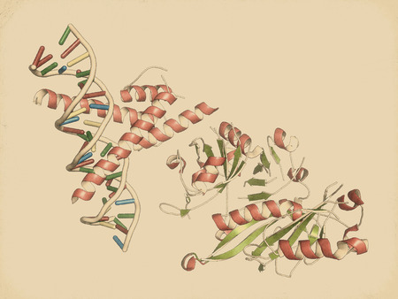 transcription: Hypoxia-inducible factor 1 (HIF-1) transcription factor, bound to DNA. Protein: cartoon representation with secondary structure coloring (green sheets, red helices). DNA: ladder model. Handdrawn style.