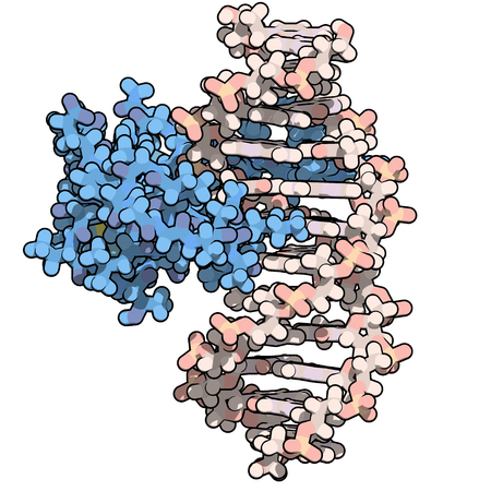 sequences: Zinc finger protein domain (from histone-lysine N-methyltransferase A2). Zinc fingers are protein domains that bind to DNA sequences. Atoms are represented as color coded spheres. Per chain coloring. Stock Photo
