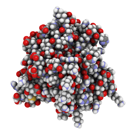 endothelial: Thrombospondin-1 protein (N-terminal domain). Atoms are represented as spheres with conventional color coding.