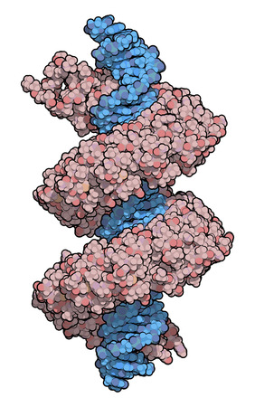 transcription: TAL (transcription activator like) effector protein or TALE. DNA binding protein. In TALEN technology, these are combined with nucleases to enable genome editing. Atoms are represented as color coded spheres. Per chain coloring.