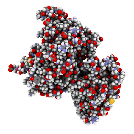 peptide: Intrinsic factor (IF) protein. Glycoprotein produced in the stomach, necessary for absorption of vitamin B12 (cobalamin). 3D illustration. Atoms shown as spheres with conventional color coding.