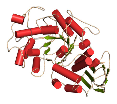 Amylase (human pancreatic alpha-amylase) Protein. Digestive enzyme, responsible for the hydrolysis of starch into sugars. 3D illustration. Cartoon representation with secondary structure coloring (green sheets, red helices). Stock Photo