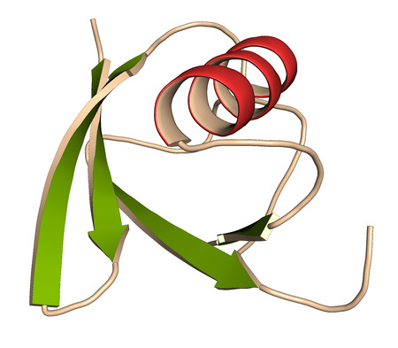apoptosis: SUMO (Small Ubiquitin-like Modifier, SUMO-1) protein. Attachment of SUMO to proteins is a post-translational modification called sumoylation. 3D illustration. Cartoon representation with secondary structure coloring (green sheets, red helices).