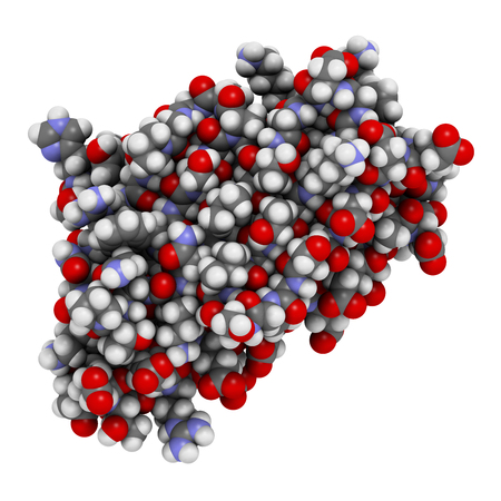 gait: Frataxin (human) mitochondrial protein. Reduced expression causes Friedreichs ataxia. 3D illustration. Atoms shown as spheres with conventional color coding. Stock Photo