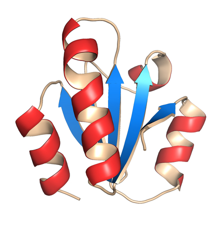 antioxidant: Thioredoxin antioxidant enzyme. 3D illustration. Cartoon representation with secondary structure coloring (blue sheets, red helices).