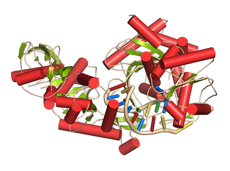interference: Argonaute-2 (human) enzyme. Part of the RISC complex and plays role in RNA interference (RNAi). 3D illustration. Cartoon representation with secondary structure coloring (green sheets, red helices) + RNA ladder model. Stock Photo