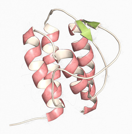 transducer: Interleukin 13 (IL-13) cytokine protein. 3D illustration. Cartoon representation with secondary structure coloring (green sheets, red helices).