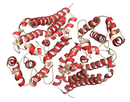 estructura: Indolamina 2,3 dioxigenasa 1 (IDO1) de prote�nas. enzima catab�lica tript�fano de la v�a de la quinurenina. Ilustraci�n 3D. la representaci�n de dibujos animados con colorante secundario estructura (hojas verdes, rojas h�lices). Foto de archivo