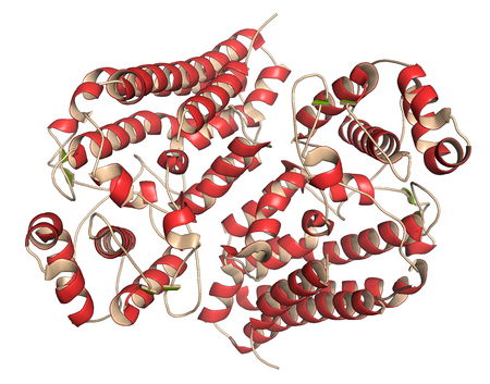 a structure: Indoleamine 2,3 dioxygenase 1 (IDO1) protein. Tryptophan catabolic enzyme of the kynurenine pathway. 3D illustration. Cartoon representation with secondary structure coloring (green sheets, red helices).
