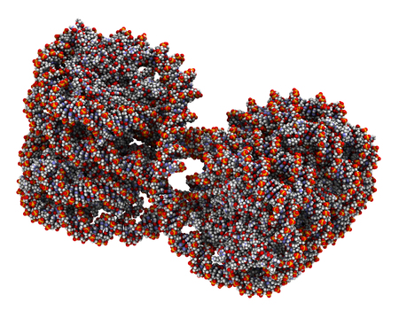 chromosomes: Nucleosome structure. Structure of an oligonucleosome, showing the packaging of DNA in chromosomes. 3D illustration. Atoms shown as spheres with conventional color coding.