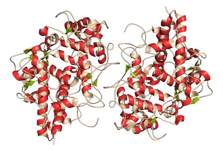 pus: enzima mieloperossidasi. proteina lisosomiale, presente in granulociti neutrofili, che produce acido ipocloroso. Illustrazione 3D. la rappresentazione del fumetto con il colorante secondario struttura (fogli verdi, eliche rosse).