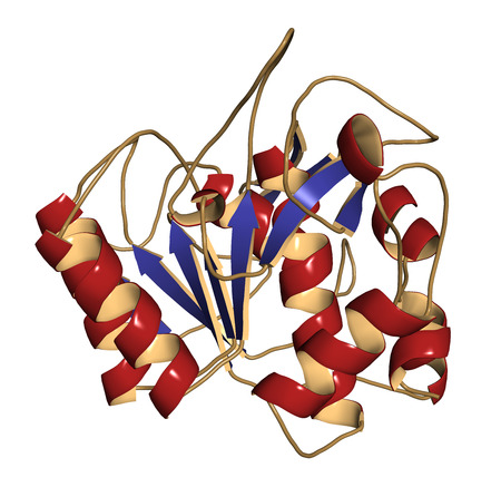 bacillus: Nattokinase enzyme. Protein produced by Bacillus natto, present in the Japanese food Natto. 3D illustration. Cartoon representation with secondary structure coloring (blue sheets, red helices).