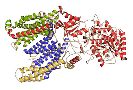 protease: Gamma secretase protein complex. Multi-subunit intramembrane protease that plays role in processing of proteins such as amyloid precursor protein and notch. 3D illustration. Cartoon models with per chain coloring.