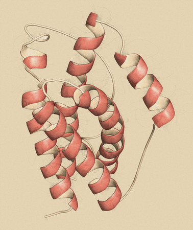 macrophage: Interleukin 6 (IL-6) cytokine and myokine protein. Anti-IL-6 antibodies are used in treatment of arthritis. 3D illustration. Cartoon representation with secondary structure coloring (red helices).