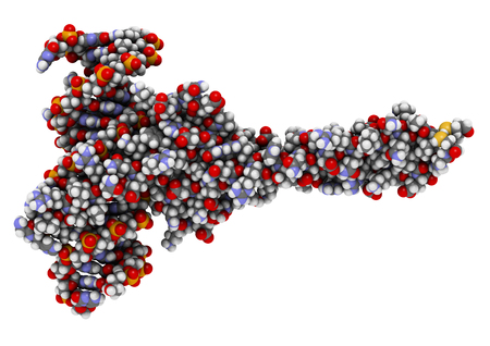 max: c-Myc and Max transcription factors bound to DNA. 3D illustration. Atoms shown as spheres with conventional color coding. Stock Photo