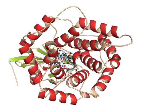 Intrinsic factor (IF) protein. Glycoprotein produced in the stomach, necessary for absorption of vitamin B12 (cobalamin). 3D illustration. Protein: Cartoon representation with secondary structure coloring (green sheets, red helices). Vit. B12: ball-and-st