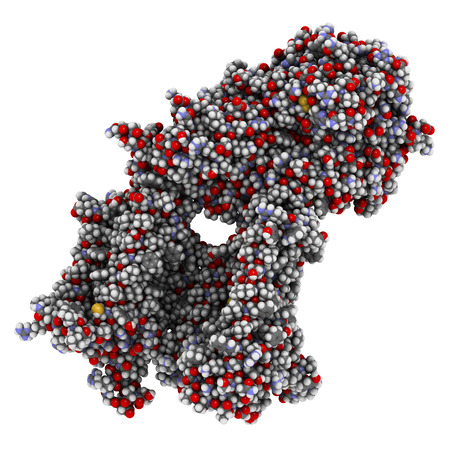 gamma: Gamma secretase protein complex. Multi-subunit intramembrane protease that plays role in processing of proteins such as amyloid precursor protein and notch. 3D illustration. Atoms shown as spheres with conventional color coding.