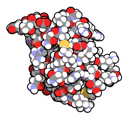 modification: SUMO (Small Ubiquitin-like Modifier, SUMO-1) protein. Attachment of SUMO to proteins is a post-translational modification called sumoylation. 3D illustration. Atoms shown as spheres with conventional color coding. Stock Photo