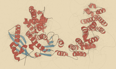 coloring sheets: Collagenase clostridium histolyticum protein. Bacterial enzyme that dissolves collagen. Also used medically in number of diseases. 3D illustration. Cartoon representation with secondary structure coloring (blue sheets, red helices).