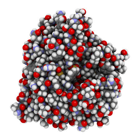 peptide: Nattokinase enzyme. Protein produced by Bacillus natto, present in the Japanese food Natto. 3D illustration. Atoms shown as spheres with conventional color coding. Stock Photo