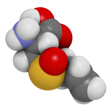 alliaceae: Alliin garlic molecule. 3D rendering.  Atoms are represented as spheres with conventional color coding: hydrogen (white), carbon (grey), oxygen (red), sulfur (yellow).