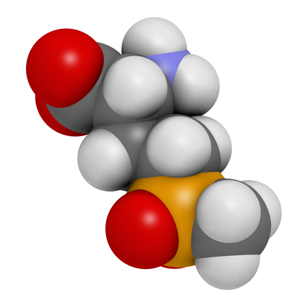 canola: Glufosinate (phosphinothricin) nonselective herbicide molecule. 3D rendering.  Transgenic (GMO) crops have been created that are resistant to glufosinate. Atoms are represented as spheres with conventional color coding: hydrogen (white), carbon (grey), ox