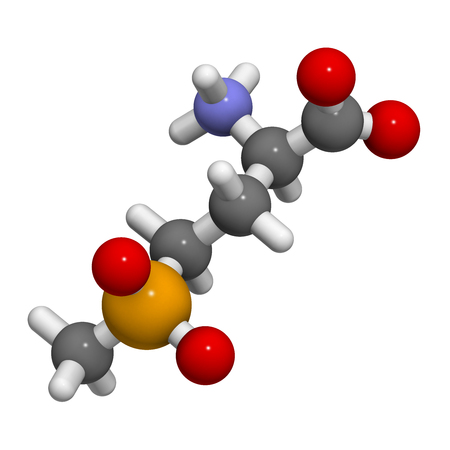 resistant: Glufosinate (phosphinothricin) nonselective herbicide molecule. 3D rendering.  Transgenic (GMO) crops have been created that are resistant to glufosinate. Atoms are represented as spheres with conventional color coding: hydrogen (white), carbon (grey), ox
