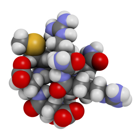 peptide: Acetyl hexapeptide-3 (argireline) molecule. 3D rendering.  Peptide fragment of SNAP-25. Used in cosmetics to treat wrinkles. Atoms are represented as spheres with conventional color coding: hydrogen (white), carbon (grey), oxygen (red), nitrogen (blue), s