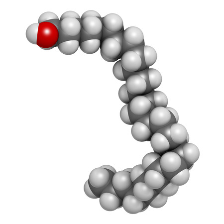 nutritional: Octacosanol plant wax component molecule. 3D rendering.  long chain fatty alcohol, present in e.g. the waxy cover of eucalyptus leaves. Main constituent of policosanol nutritional supplement. Atoms are represented as spheres with conventional color coding
