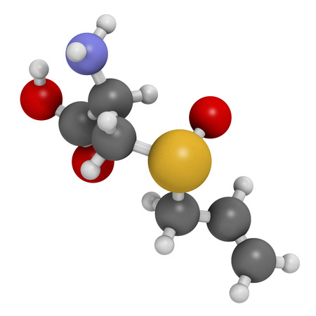allium: Alliin garlic molecule. 3D rendering.  Atoms are represented as spheres with conventional color coding: hydrogen (white), carbon (grey), oxygen (red), sulfur (yellow).