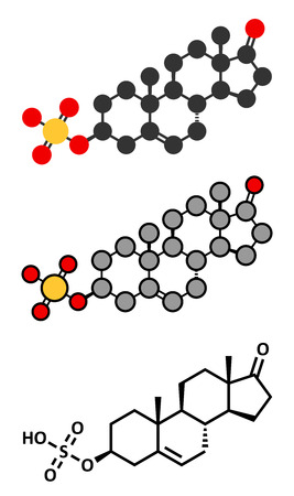 sulfate: Dehydroepiandrosterone sulfate (DHEA-S) natural hormone molecule. Stylized 2D renderings and conventional skeletal formula.