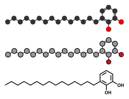 closely: Urushiol poison ivy allergen molecule. Also present in poison oak, lacquer tree and poison sumac. Urushiol is a mixture of closely related components, only one of which is shown. Stylized 2D renderings and conventional skeletal formula.