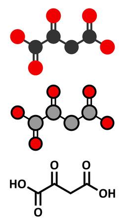 Oxaloacetic acid (oxaloacetate) metabolic intermediate molecule. Stylized 2D renderings and conventional skeletal formula.