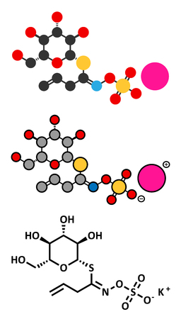 pungency: Sinigrin glucosinolate molecule. Present in some cruciferous vegetables (Brussels sprouts, broccoli, black mustard, etc). Stylized 2D renderings and conventional skeletal formula. Illustration