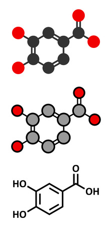 antioxidant: Protocatechuic acid (PCA) green tea antioxidant molecule. Stylized 2D renderings and conventional skeletal formula. Illustration