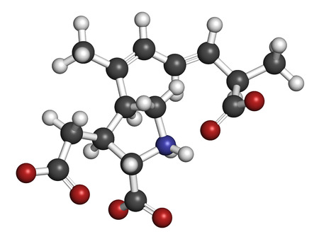 glutamate: Domoic acid algae poison molecule. Responsible for amnesic shellfish poisoning (ASP). 3D rendering. Atoms are represented as spheres with conventional color coding: hydrogen (white), carbon (grey), nitrogen (blue), oxygen (red).