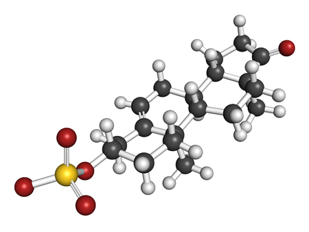sulfate: Dehydroepiandrosterone sulfate (DHEA-S) natural hormone molecule. 3D rendering. Atoms are represented as spheres with conventional color coding: hydrogen (white), carbon (grey), oxygen (red), sulfur (yellow).