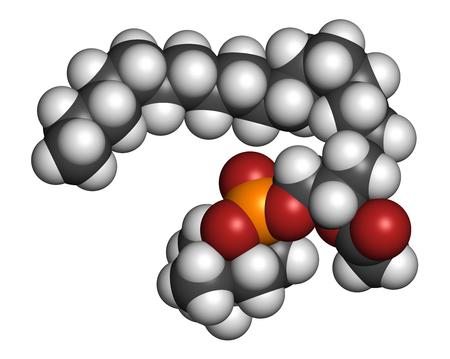 hidrogeno: Factor activador de plaquetas (PAF) mol�cula de se�alizaci�n. representaci�n 3D. Los �tomos se representan como esferas con codificaci�n de colores convencionales: hidr�geno (blanco), carbono (gris), ox�geno (rojo), nitr�geno (azul), f�sforo (naranja).