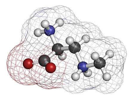 aggregation: beta-Methylamino-L-alanine (BMAA) toxic amino acid molecule. Produced by cyanobacteria. 3D rendering. Atoms are represented as spheres with conventional color coding: hydrogen (white), carbon (grey), oxygen (red), nitrogen (blue).