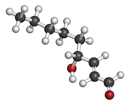 oxidative: 4-Hydroxynonenal (HNE) molecule. Metabolite produced by lipid peroxidation of polyunsaturated omega-6 fatty acids. 3D rendering. Atoms are represented as spheres with conventional color coding: hydrogen (white), carbon (grey), oxygen (red).