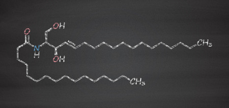 apoptosis: Ceramide cell membrane lipid molecule. Chalk on blackboard style illustration.