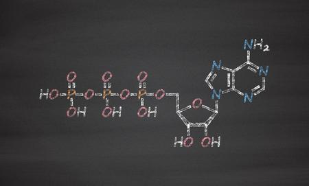 monophosphate: Adenosine triphosphate (ATP) molecule. Functions as neurotransmitter, RNA building block, energy transfer molecule, etc Stock Photo